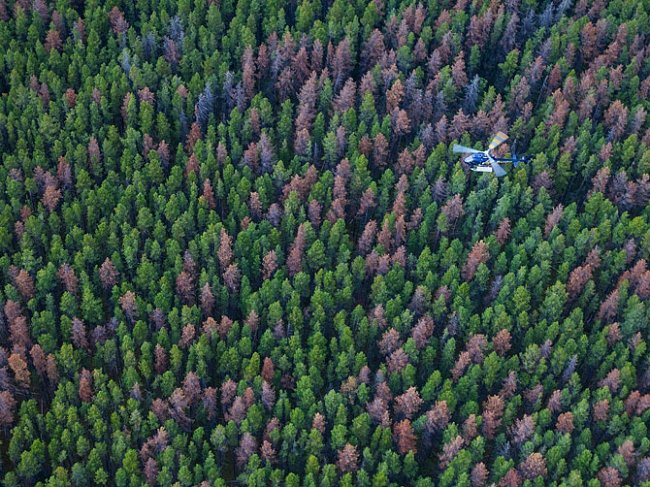 Monitorování poškozených lesů v Albertě.