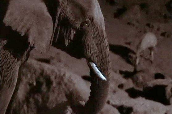 Sloní jeskyni vytvářeli tlustokožci. Trvalo to stovky generací