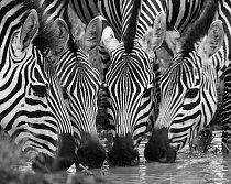 Termín fotoexpedice je volen s ohledem na přítomnost velkých stád kopytníků, kteří se navracejí zpět, aby přivedli na svět svá mláďata a zároveň do období, kdy si zde spousta predátorů hledá snadnou k
