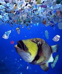 Zvířata přistupují k plastům jako k dostupné potravě.