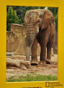 5. místo: Slon (Martina Hlavová)