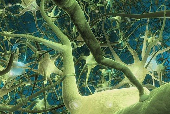 Fascinující: Neurony v akci. VIDEO, které odhaluje, jak funguje mozek