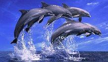 Delfíni se při komunikaci navzájem oslovují jmény