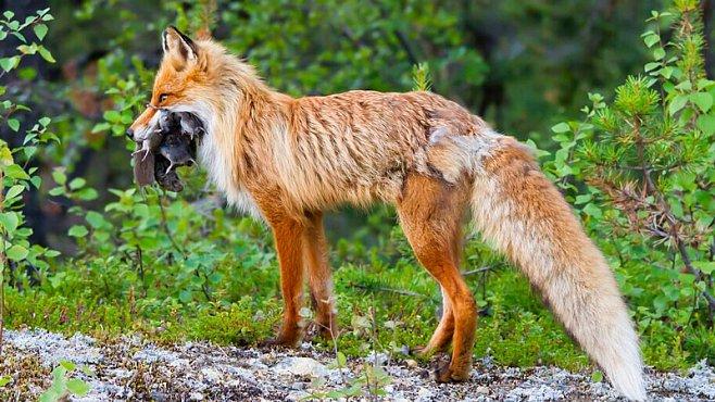 Na focení zvířat nepotřebujete výbavu za statisíce, říká Petr Čunderlík