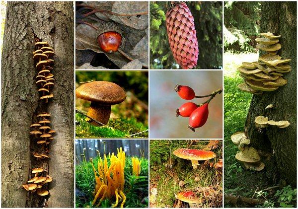 Flora vnovém pralese