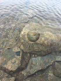 Na některých jezerech plavající biomasa sinic vytváří prapodivné útvary kulatého či hruškovitého tvaru dosahující velikosti od tenisového míčku až po fotbalový míč.