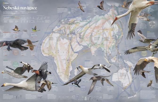 Vbřeznovém čísle National Geographic najdete jako dárek mapu Ptačí migrace.