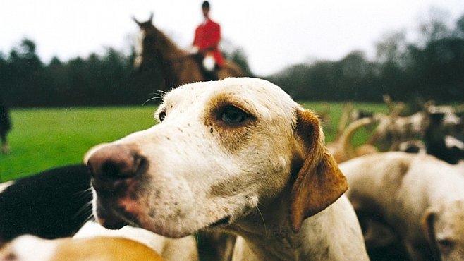 KURZ FOTOGRAFOVÁNÍ: Zůstaňte na koni aneb Jak fotografovat psy a jiná zvířata