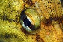 Mnohým rybám nedělá potíž korekce lomu světla při pohledu z vody ven.