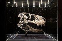 Tato téměř neporušená a temně černá lebka patří nejúplnějšímu exempláři Tyrannosaura rexe, který je k vidění v Evropě – dostal přezdívku Tristan Otto. Vědecky významná kostra je vystavena v berlínském Přírodovědném muzeu.