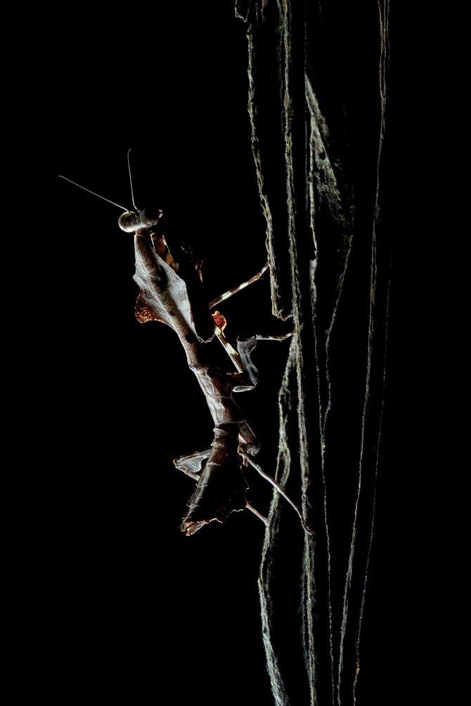 Noční prales Bornea