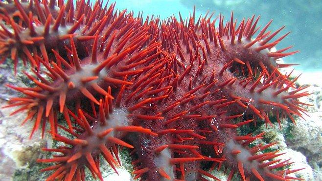 Krásní a smrtící. Nejhorší zabijáci Rudého moře