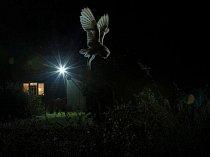 Vítězný snímek v kategorii ptáci na zahradě zachytil lovící sovu pálenou v anglickém Suffolku.