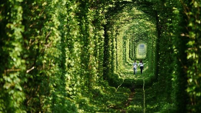 Stromy přirozeně vytvořili tunel.