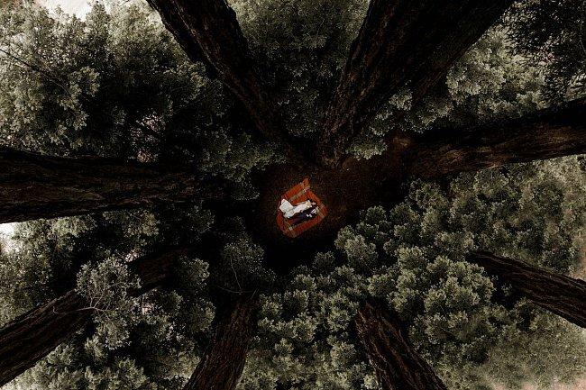 Chvíle klidu mezi stromy v Glen Oaks Big Sur v Kalifornii.