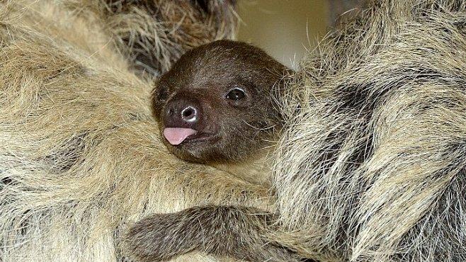 Zvířecí babyboom je předzvěst jara. Mláďata u nás i na celém světě