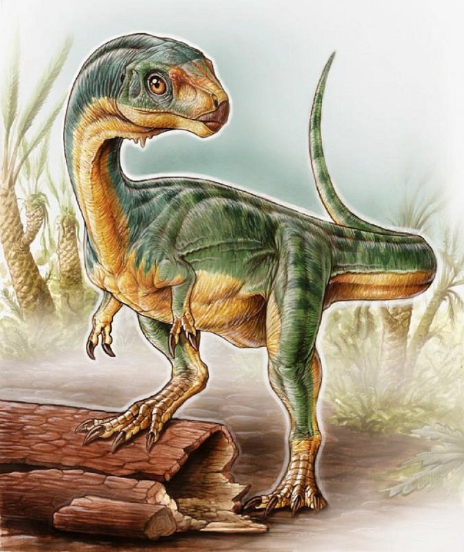 Nově objevený dinosaurus, Chilesaurus diegosuarezi, byl pojmenován podle místa objevu a svého nálezce - dvanáctiletého syna geologů zvýzkumného týmu, Daniela Suareze.