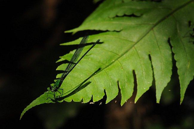 Prales je směsí stínů a ostrého světla (Phuket, Thajsko)