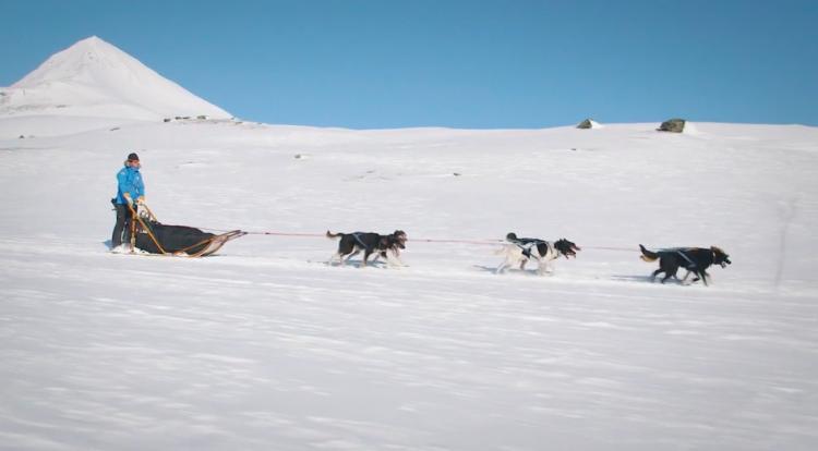 Účastníci budou řídit psí spřežení po celou cestu ze Signaldalen v Norsku až do lesů kolem Jukkasjärvi ve švédském Laponsku.