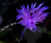 Fantazijní svět podmořského života