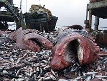 Paluba komerční rybářské lodi.
