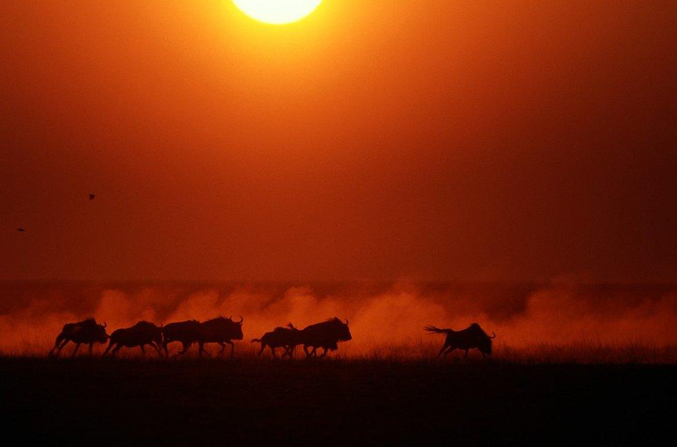 Pakoně v západu slunce