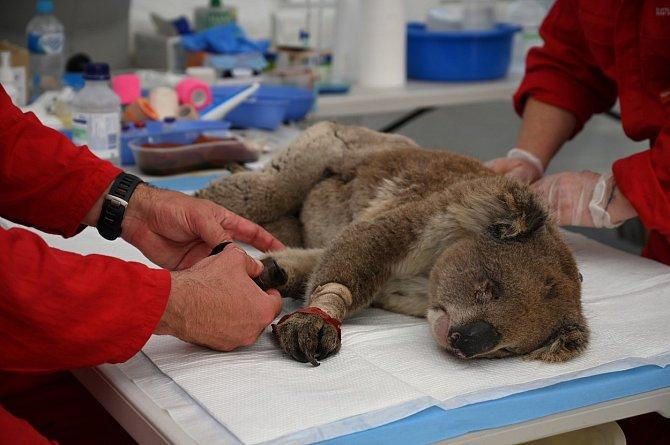 Na provoz provizorní veterinární nemocnice přicházejí peníze ze všech koutů světa. Mimo jiné ičást sbírky, kterou vyhlásila Zoo Praha.
