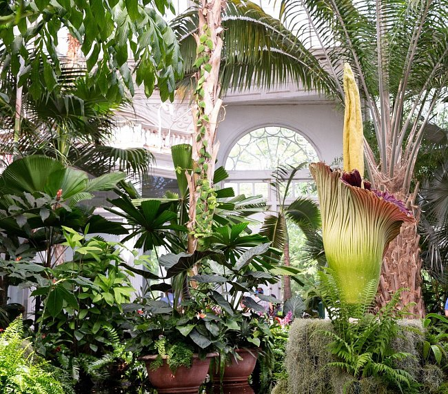 V newyorské botanické zahradě můžete kromě zmijovce vidět více než 50 různých kolekcí cizokrajných dřevin a rostlin i staleté stromy.