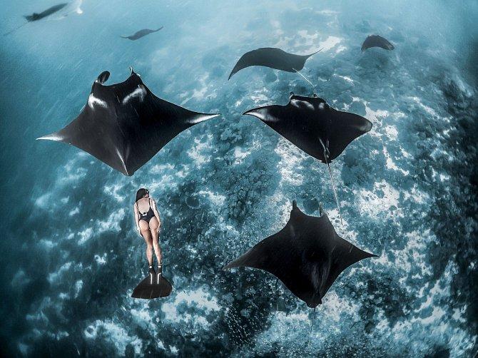Manty, jejichž pohyb připomíná ptačí let, se objevily v hlubinách oceánu Národního parku Komodo v Indonésii. Díky optické iluzi se zdá, že Kristina Zvaritch se rozhodla zaplavat si v jejich přítomnosti, přestože v tu chvíli měla k mořským parybám daleko.