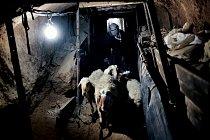 Jehněčí je přepych, který si většina obyvatel Gazy může dovolit jen o svátcích. Mnohé zemědělské usedlosti zničila válka a další půda leží ladem v nepřístupných oblastech kontrolovaných Izraelem, a ta