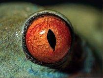 5. Čí jsou to oči?  a) ropucha obecná b) moucha domácí c) listovnice červenooká