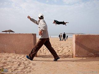 Essaouira dog morocco
