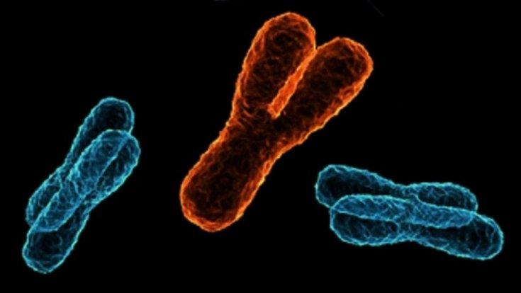 Chromosom Y dovedl vědce ke třem otcům většiny Evropanů.