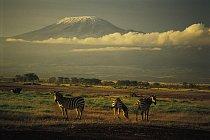 Zebry v národním parku Amboseli (v pozadí Kilimandžáro za hranicemi v Tanzanii)