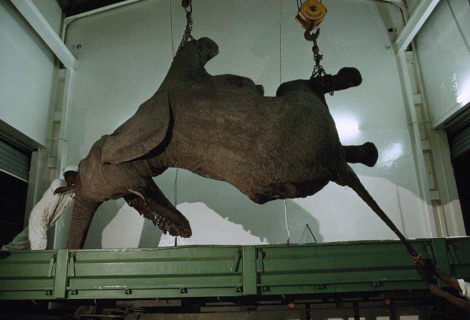 Mrtvý slon
