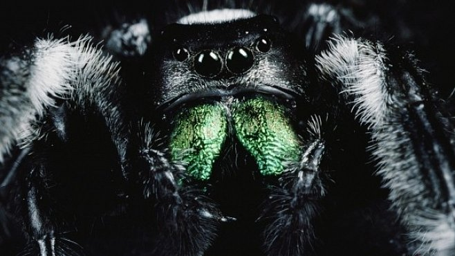 Proč se bojíme pavouků? Strach z nich máme v genech