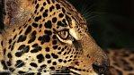 Nezkrocená Amerika na NG Channel: Unikátní záběry růžových delfínů, jaguárů a bílých medvědů