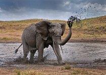 S fotokurzem navštívíte v Tanzanii nejkrásnější národní parky světa