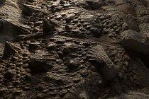 Kostní pláty, které byly základem zuulových hrotů, kupodivu fosilizovaly na svém původním místě. Obvykle se tyto kostěné plátky (zvané osteodermy) nacházejí roztroušené kolem těla, protože v průběhu rozkladu se uvolnily z kůže.
