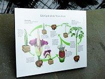 Koloběh, který potřebuje tropická květina k životu.