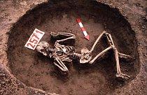 """Kostra """"pohozence"""" z archeologického naleziště v Kněževsi u Prahy datovaného do doby bronzové."""