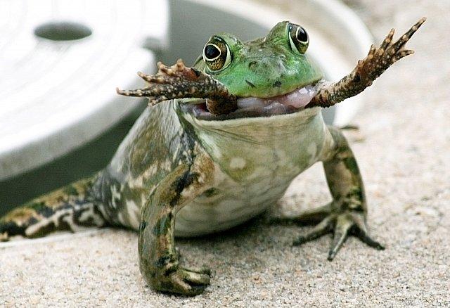 Žabí kanibal