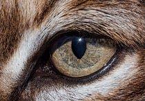 3. Čí jsou to oči?  a) tygr čínský b) rys červený c) prase bradavičnaté