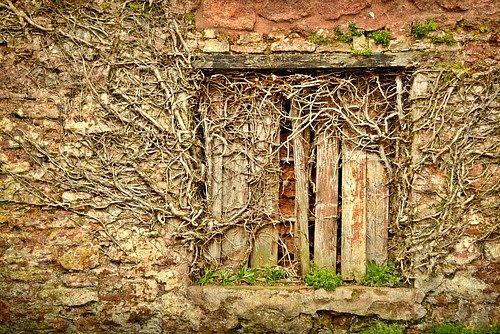 Každá z povídek v knize Zeď vzpomínek je připomínkou nádhery života – tajemné krásy semínek, zkamenělin, jesetera, mraků, vysílaček, listí, zkrátka nesmírného bohatství našeho světa.