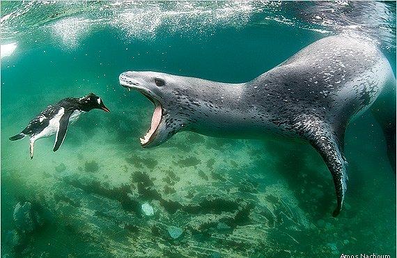 Vítězné fotografie přírody podle časopisu National Wildlife. Fascinující pohled na zvířata a krajinu