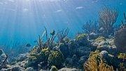 Na oceánské dno a ke korálovým útesům se ponoříte z domova. Pomůže vám Google