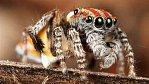 Nejlepší zvířecí videa roku 2011: Nad tím žasli i vědci