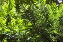 Nález wolemie se dodnes považuje za jeden z největších botanických nálezů.
