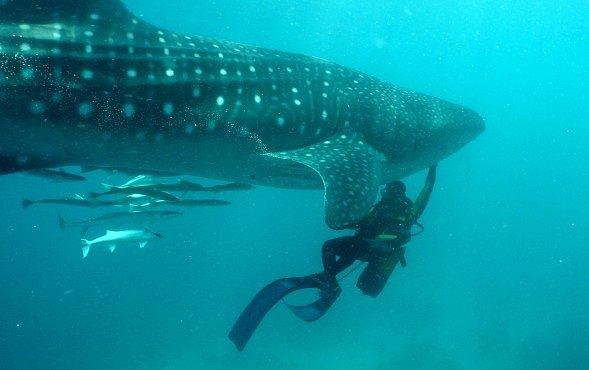 VIDEO: Geniální žralok porazil rybáře jejich vlastní zbraní