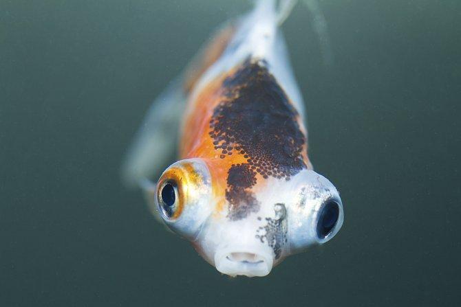 Bizarní ryby a mořští tvorové